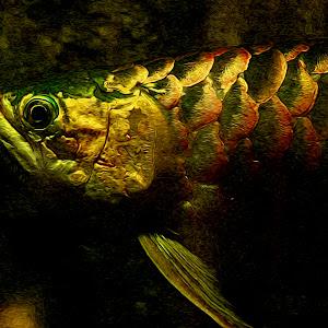 Fish Bender1.jpg