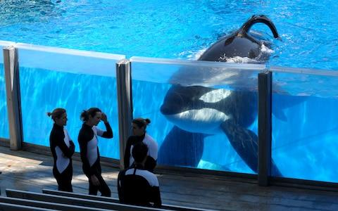 Image result for killer whales in captivity
