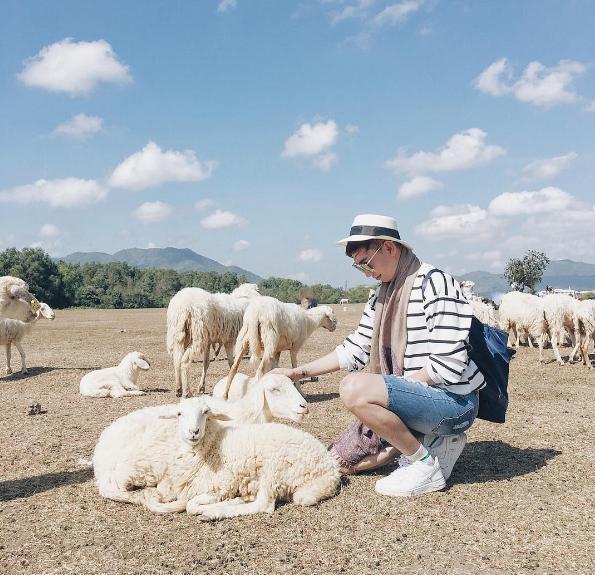 Đồi Cừu Xứ Nghệ 2