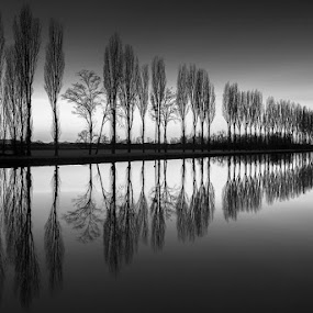 Stillness by Roberto Melotti - Black & White Landscapes ( stilness, reflection, roberto melotti, smooth, reflections, trees, long exposure, lake, nikon d810 )