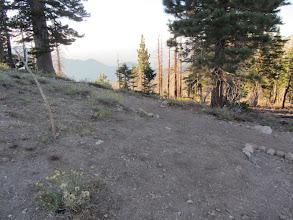 Photo: 6:50 - Pacific Crest Trail junction (8390')