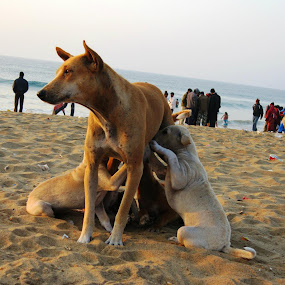feeding by Prosenjit Biswas - Animals - Dogs Puppies (  )