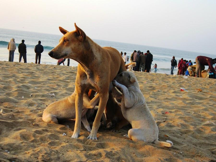 feeding by Prosenjit Biswas - Animals - Dogs Puppies (  )