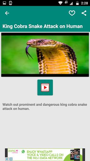 cobra video download