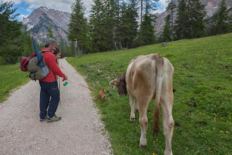 Photo: This cow from Malga Foresta wanted to follow us home on Trail 19 in Valle di Braies, Dolomiti, Italy | http://blog.kait.us/2014/06/hiking-dolomites.html