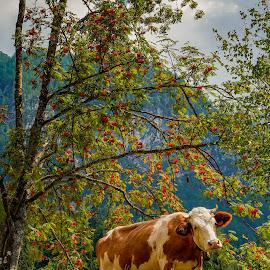by Albin Bezjak - Animals Other