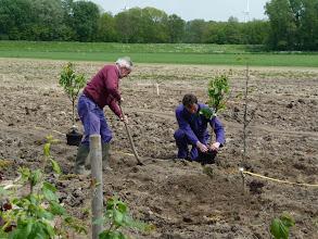 Photo: fruitbomen worden geplant