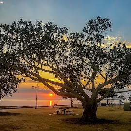 Sunrise over the Bay by Taz Graham - Novices Only Landscapes ( trees, ocean, sunrise, landscape )