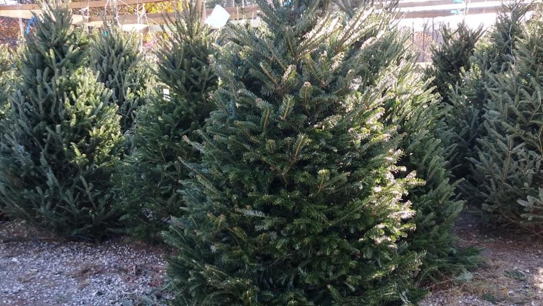 Christmas Tree Lot Near Me.Christmas Tree Lot Bam Christmas Store In Buford