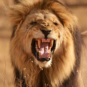 lion mouth.JPG