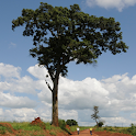 Useful Trees of East Africa icon