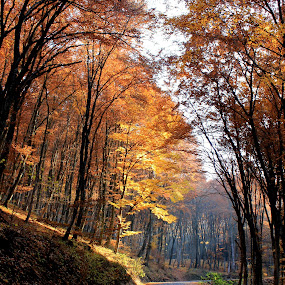 a road in the forest by Cosmin Popa-Gorjanu - City,  Street & Park  Street Scenes ( autumn foliage, shadow, fall, trees, beam )