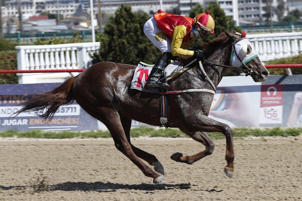 Kenma (Constitution) se quedó con la victoria en Handicap (1200m-Arena-VSC).
