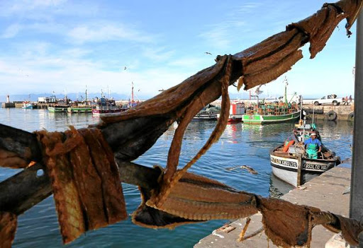 CAPE SPECIAL: Snoek hangs to dry at Kalk Bay harbour in Cape Town.