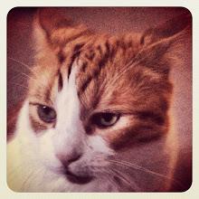 Photo: Another cat portrait #intercer #cat #pet #cats #pets #meow #petsofinstagram #beautiful #cute #cutie #animal #picpets #sweet #kitty #kitten #catlovers #portrait #pretty #funny #paws #ears #fur #catsofinstagram #eyes - via Instagram, http://instagr.am/p/Ohu6-epfs0/