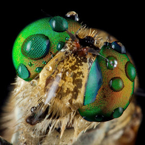 Many Dots..... by Vincent Sinaga - Animals Insects & Spiders