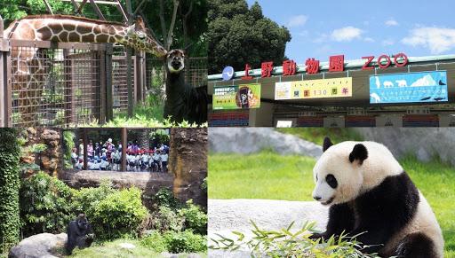 やっぱり間違いない!上野動物園のメイン写真
