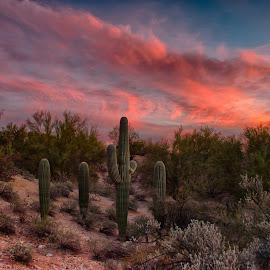 Tucson Tonight by Charlie Alolkoy - Landscapes Deserts ( sky, desert, arizona, tucson, cactus )