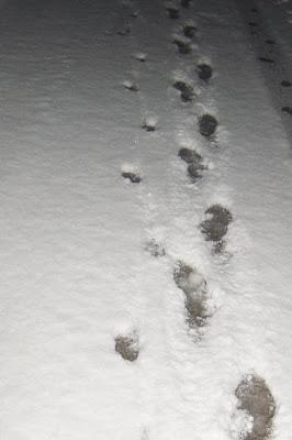 Camminando sulla neve... di Polly89