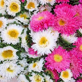 FLOWERS by Aida Neves - Flowers Flower Gardens