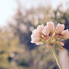 by Rosita Ramner - Flowers Flowers in the Wild