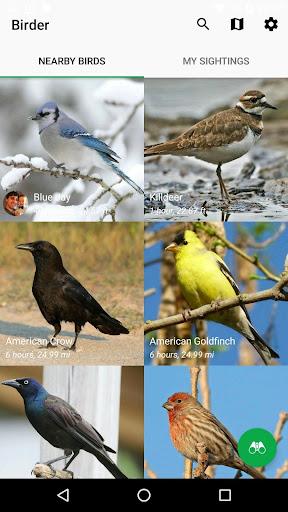 ボーダー - お近くのファインとスポット鳥