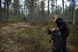 Photo: Ayla er klar til å finne den rare dama i skogen!