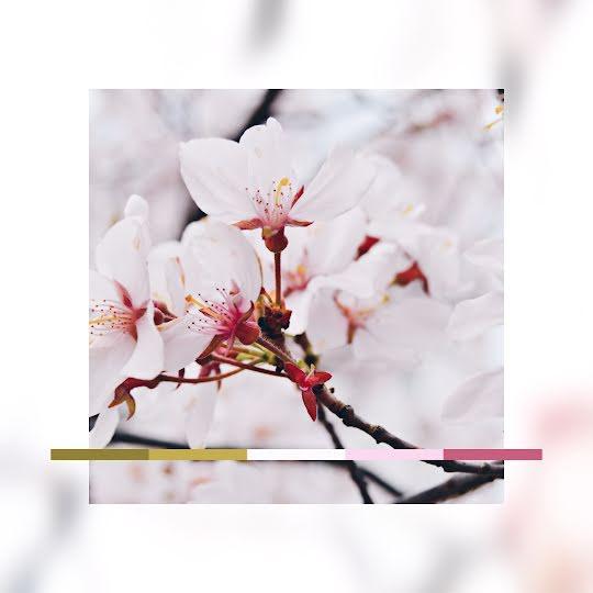 Spring Color Palette - Instagram Post Template