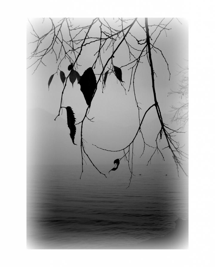 Come foglie di tizzy