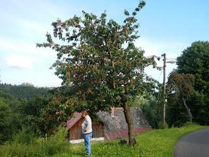 Photo: Sladká tečka nakonec - pozdní červencové třešně.