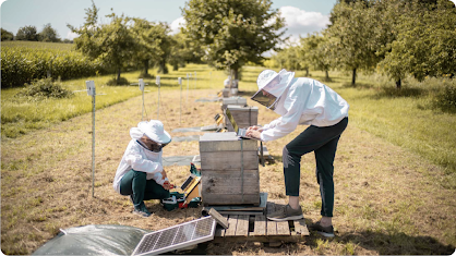 Photograph of two people wearing beekeeping outfits tending to beehives, which double as solar panels.