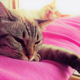 Mia & Simba by Thaissa Meira - Animals - Cats Kittens ( love, pets, lovely, cat, home )
