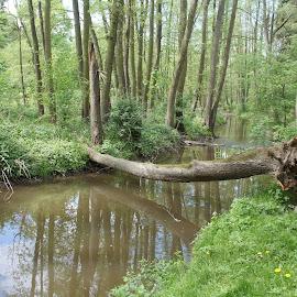 River Kourimka, Bohemia by Luboš Zámiš - Landscapes Forests