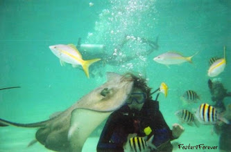 Photo: But I did get used to #scuba-diving with the stingrays...but those snapper fish -- kept trying to get the stingray food & bit me!!! Ouch!  I now eat snapper whenever I eat seafood so that there's one less of them in the ocean!!