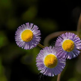 by Rob Whidden - Flowers Flowers in the Wild