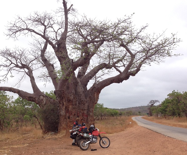 In the shade of the baobab. Picture: BAS DE VOS