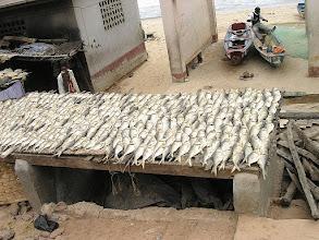 Photo: suszarnia ryb