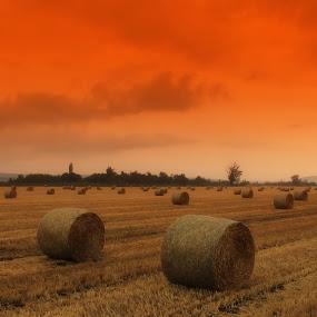 Red sky by Marko Dragović - Landscapes Prairies, Meadows & Fields