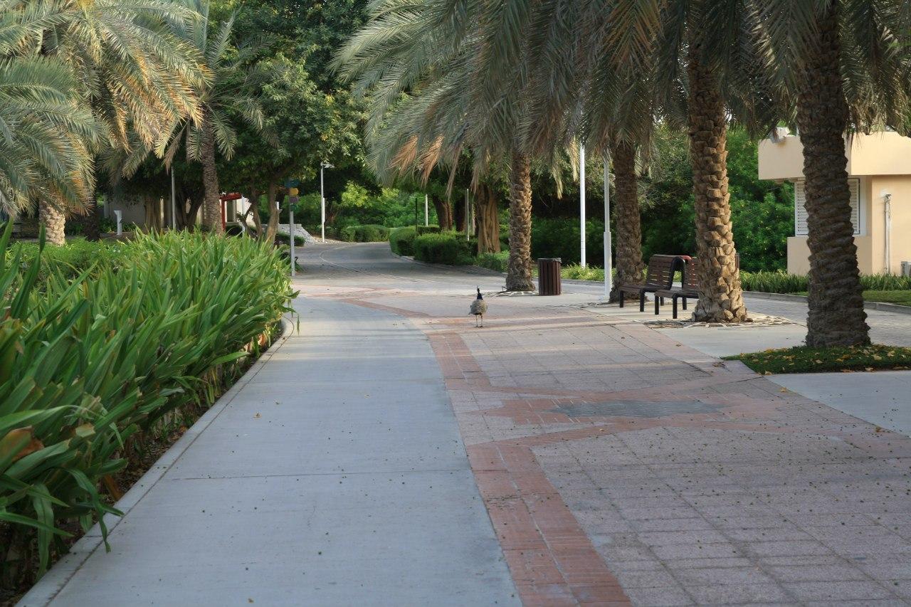 Creek Park в Дубай