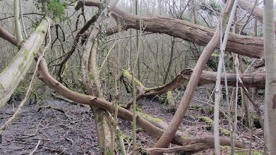 Photo: Dood hout in het bos van Meldert
