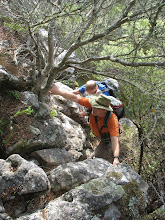 Photo: Lovely indigenous trees, but also Wag 'n Bietjie and Climber's Friend!