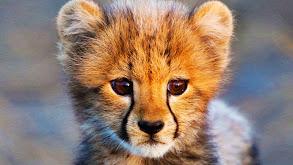 Safari Babies thumbnail