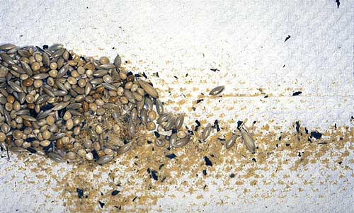 Seeds top-dressed with a powdered mineral/vitamin supplement show the powder on the bottom of the food cup, which is subsequently disposed of with the seed hulls