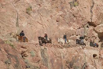 Photo: Mule train coming into Phantom Ranch