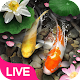 Lucky Koi Fish Live Wallpaper icon