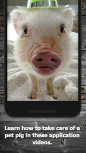 How to Take Care of a Pet Pig (Guide) 1.3 Mod APK Download 2