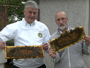 Photo: Jim and Michael Young , chairman of INIB, holding frames of good bees.