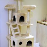 貓欸 Camulet 貓咪餐廳