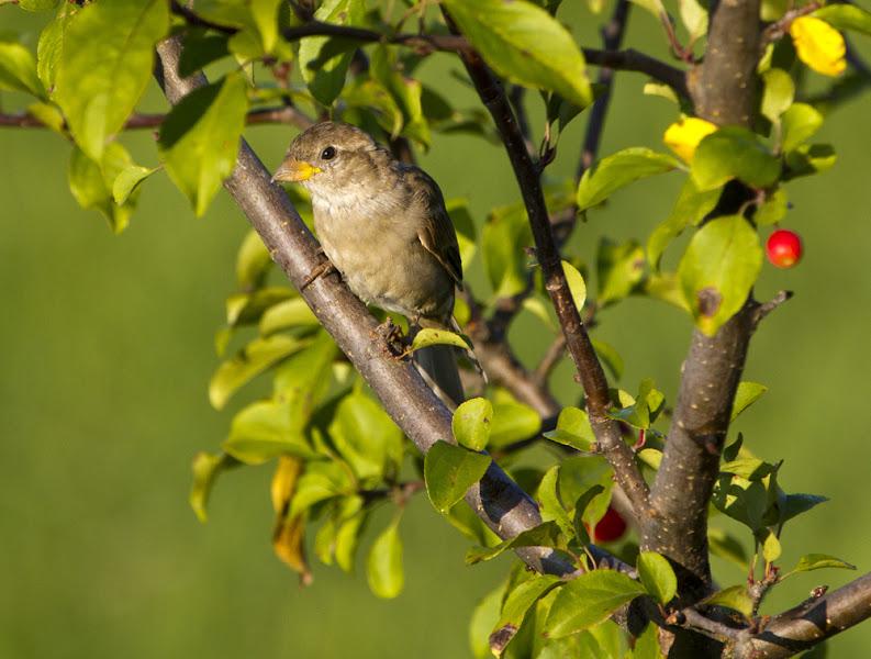 Photo: Finch #backyardbirdingmonday  curated by +Celeste Odono & +Ricky L Jones #Canon #Birds #backyardbirding #Monday #Nature