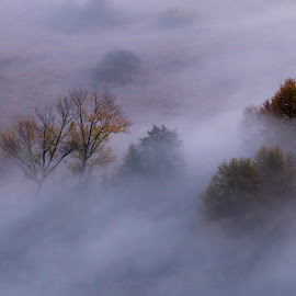 Trees in the morning mist by Pietro Ebner - Nature Up Close Trees & Bushes ( foggy, tree, autumn, fog, trees, mist )